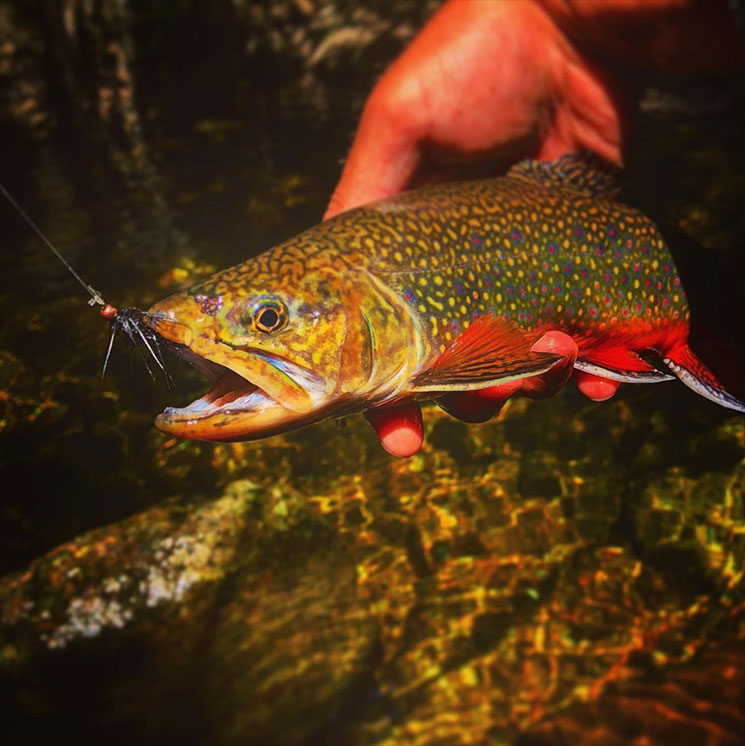Guided Adirondack Fishing Trips